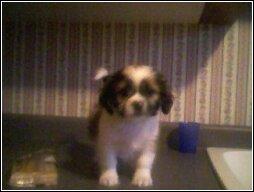 Hello, I am Gizmo