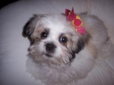 After she got her first puppy cut :)