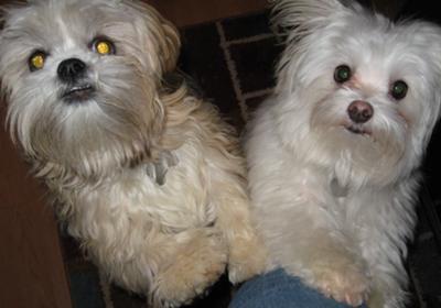 Chloe (L) and Casper (R)