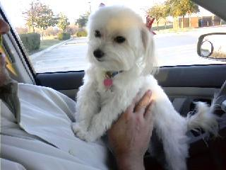 Zoe just getting picked up from the groomer.