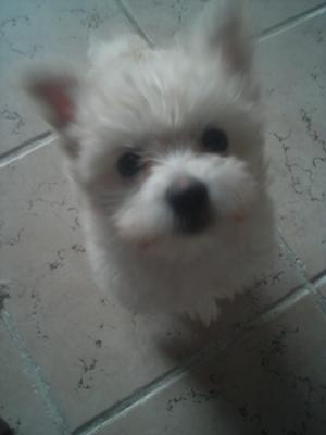 My little Moochie