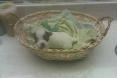 Bond in a Basket!