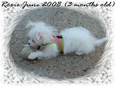 My Little Diva at 3 months old