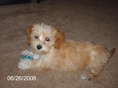 Bella as a puppy
