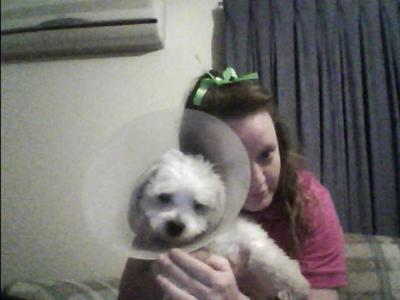 Bax at 9 months wearing his Elizabethan Collar. He has stitches in his groin and back paws, after being desexed and having his back dew claws removed. (May 2012)