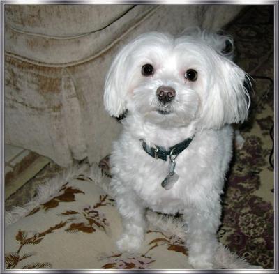 My little Pepe (Peppy)
