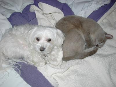 Pepe sleeping next to our kitty - Binx