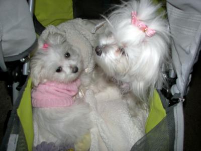 Maltese Sisters