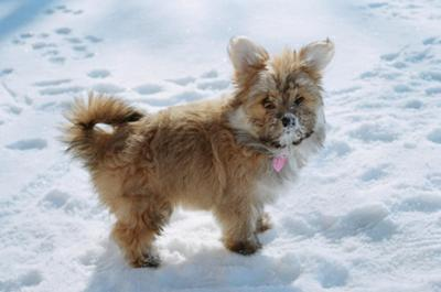 Lilly in the snow =D
