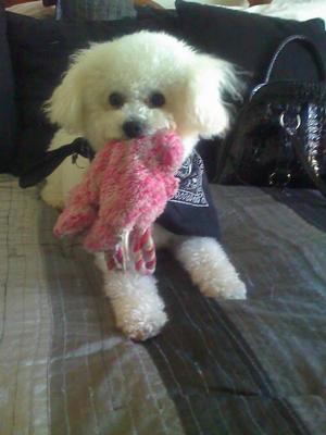 My favorite pink bear
