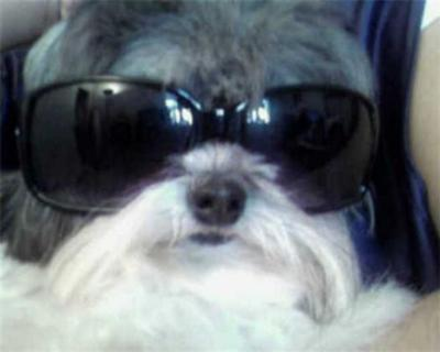 Oreo w/glasses