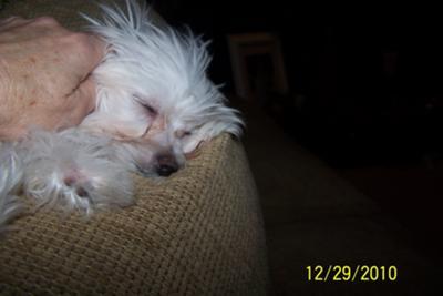 My tired little Mia