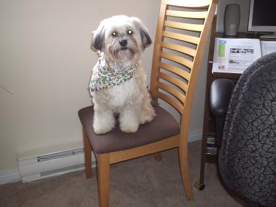 Jasper being a great model!