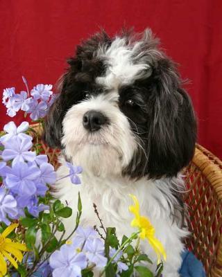 Wilbur Lane - cutest dog in the world