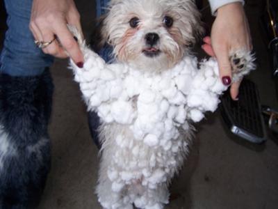 Nikko loves the snow