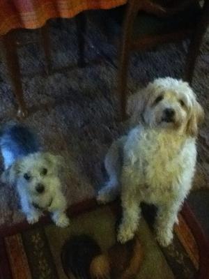 Tucker and Cloey