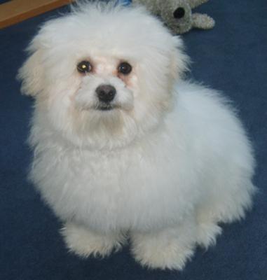 My fluffy baby Louis. x
