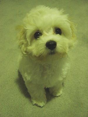Puppy Dog Eyes!!