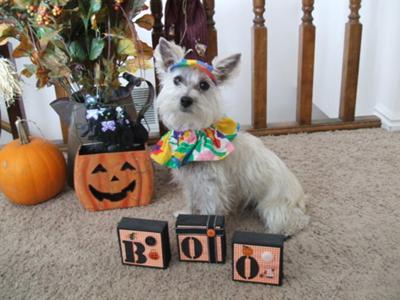 2010 Halloween Muffit