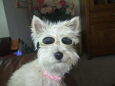 Muffit in her scooter riding goggles.