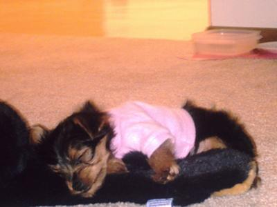 Pookie sleeping on her bear