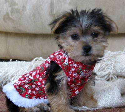Sophia in her new Christmas dress