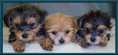 Winston at 3 weeks ( far right)