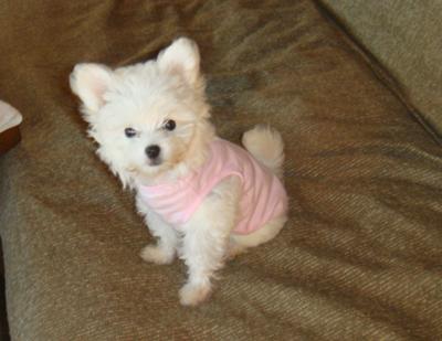 My Little Roxy Poo