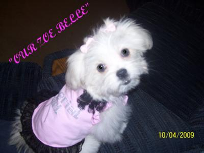 Our diva Zoe @ 4 mos. old