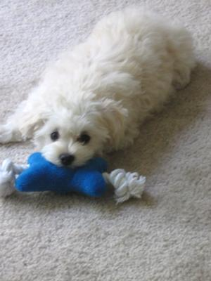 Duff and one of her favorite squeaky toys