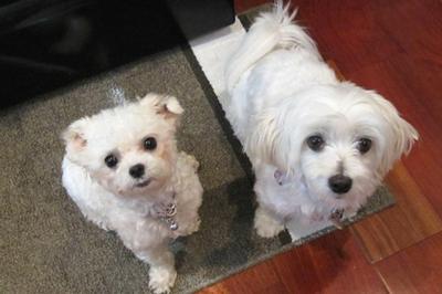 Tinky & Jazzy