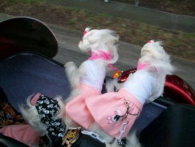 Riding in our Harley sidecar