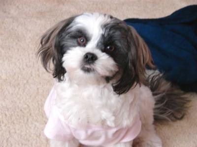 Sadie in her Pink Shirt