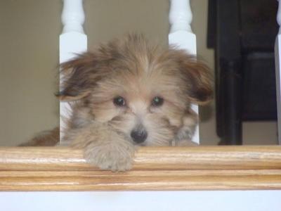 Bentley's puppy picture