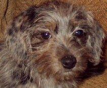 Iggy as a puppy