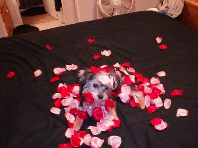 Our little Valentine