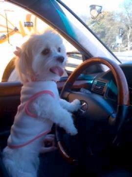 Need a Ride   :0)