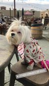 Just at Yappy Hour with my Mom & friends