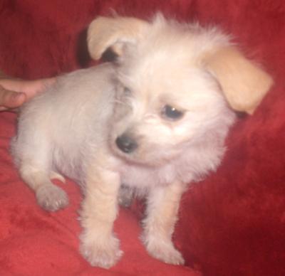 My puppy 1/18/2009