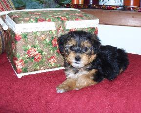 Coco as a puppy