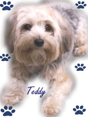 Too Cute Teddybear
